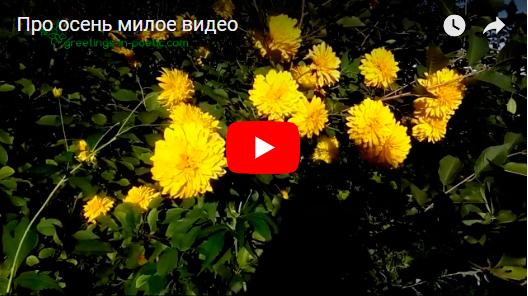 Милое видео про осень